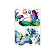 Альбом для рисования Бабочки фото
