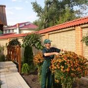Сервисный уход за зелеными насаждениями фото