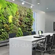 Вертикальное озеленение интерьеров (фитостены и фитокартины) фото