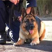 Собаки служебные фото
