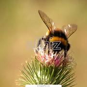 Лечение укусами пчел Украина, апитерапия в Украине, отдых на пчелиных ульях