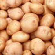 Картофель нового урожая фото