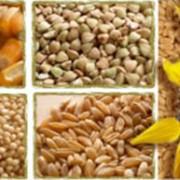 Купля-продажа зерновых фото