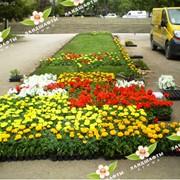 Оформление клумб и цветников. фото