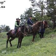 Отдых в Крыму. Алушта. походы путешествия. конные прогулки 7-и дневный Морской Круиз фото
