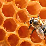"""Пчелопакеты и пчеломатки элитной породы """"Карпатка"""" фото"""