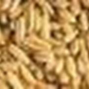 Корма зерновые, Корма с добавкой премикса, Корм. фото