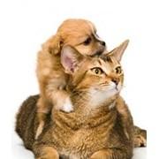 Косметические услуги для животных. фото