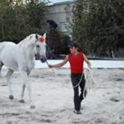 Услуги по содержанию частных лошадей фото
