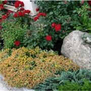 Благоустройство территории в саду фото