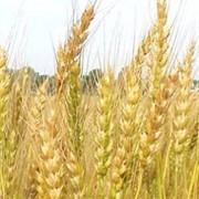 Пищевые продукты из зерновых фото