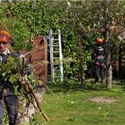 Защита и лечение деревьев фото