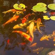 Прикормка для рыб Артемии фото