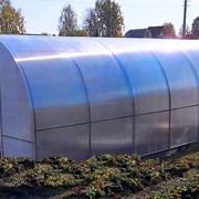 Теплица Сибирская 20Ц-0,67, 8 м. Из замкнутого квадратного профиля. Шаг дуги-0,67 м фото