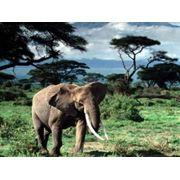 Тур в Танзанию фото