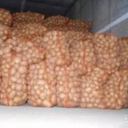 Картофель продовольственный! фото