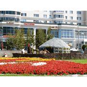 Оформление клумб и цветников в Казахстане фото