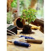Полив подкормка обрезка деление рассаживание растений Уход за растениями в Астане фото