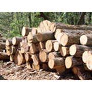 Исследование рынка лесоматериалов фото