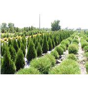 Высадка деревьев и кустарников фото