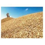 Перевозка зерна экспорт зерна фото