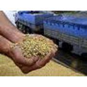 Экспертиза сельскохозяйственной продукции экспертиза продуктов питания экспертиза зерна экспертиза фото
