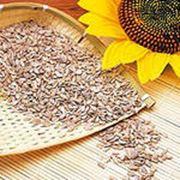 Переработка семян подсолнечника фото