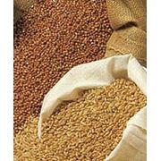 Закупка сельхозпродукции фото