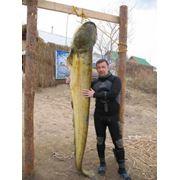 Рыбалка Туры на рыбалку фото