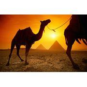 Услуги туристические Египет фото