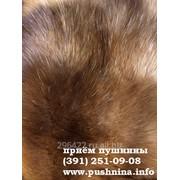 Закупка:мех лисы красной фото