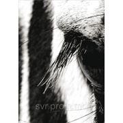 Mischen Possible, Панно 75х280 cm фото