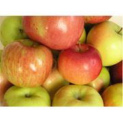 Яблоки свежие в ассортименте фото
