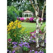 Растения другие садовые фото