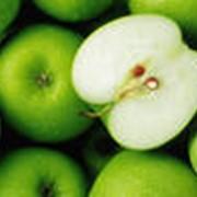 Яблоки зимние семеренко фото