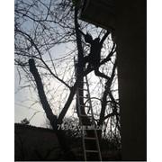 Удаление фруктового сада фото