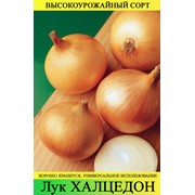 Семена лука сортов Халцедон и Штугарт фото