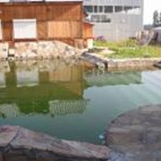 Проектирование и строительство садовых водоемов фото