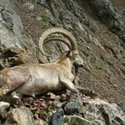 Охота (Реальная охота в Казахстане. Алматинская область) фото