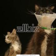 Ветеринарные товары фото