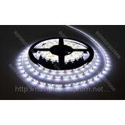 LED лента SMD 3528, герметичная, 60 шт/м, белая фото