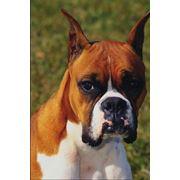 Препараты слабительные ветеринарные фото