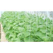 Крючки для подвешивания и регулировки растений теплиц фото