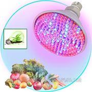 Лампа светодиодная LED - фитолампа специальная для стимуляции роста и подсветки растений фото