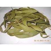 Листья эвкалипта Эвкалиптовые листья купить в Астане фото
