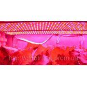Светодиодные панели ЛЕД фитолампы Гидропонные огни Бесплатная доставка с Супер Урожай 15W 225lights фото