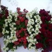 Семена цветов фото
