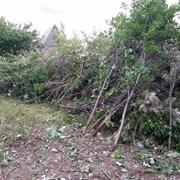 Расчистка участка, подготовка под огород Тюмень. фото