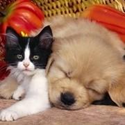 Сухие и консервированные корма, лакомства, витамины, пищевые добавки для собак и кошек