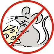 Дератизация. Уничтожение крыс, мышей, кротов. фото